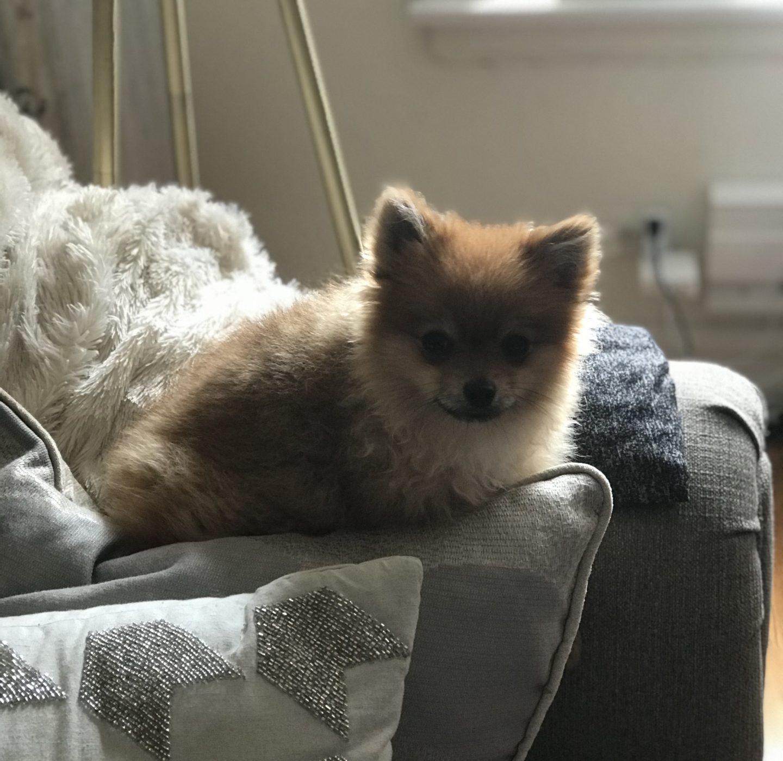 I Got A New Puppy | Meet Leonardo!